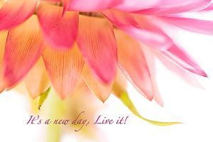 its-a-new-day-live-it-debbie-dee