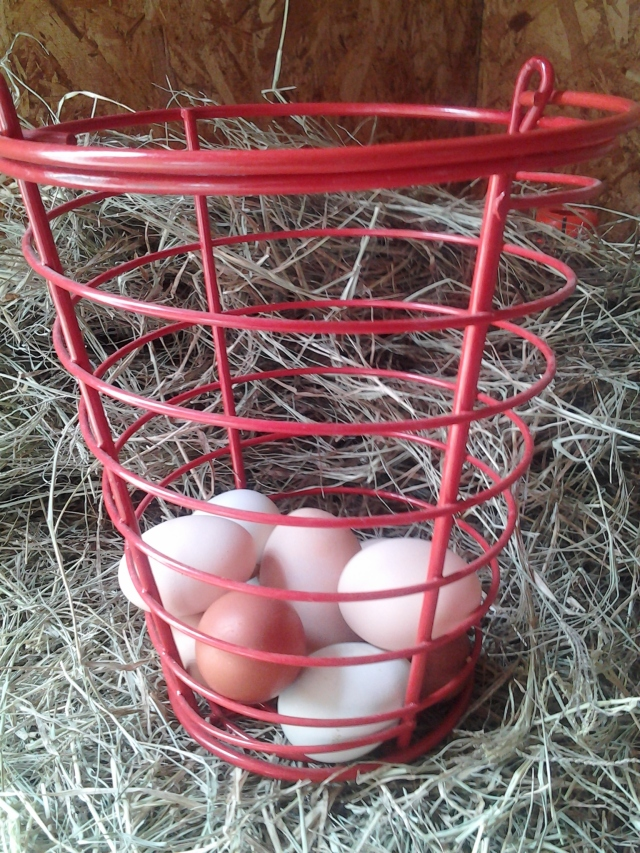 egg-basket